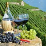 Хотите купить виноградник во Франции? Вот как это сделать