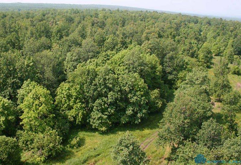 Цены на лесные участки были стабильны в 2017 году