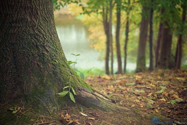 Лесные участки подорожали на 3.5%