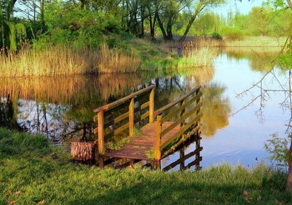 Новини судової практики: брудна вода в ставку