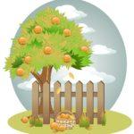 Вопросы наших читателей: нависающие над участком ветки чужих деревьев