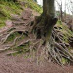 Вопросы наших читателей: корни дерева с соседнего участка