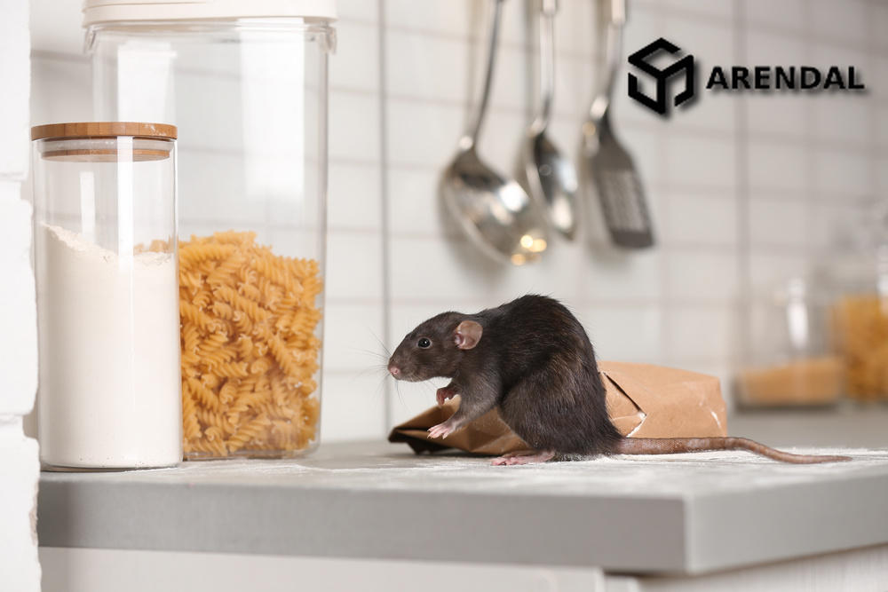 Вопросы наших читателей: мыши в арендуемой квартире