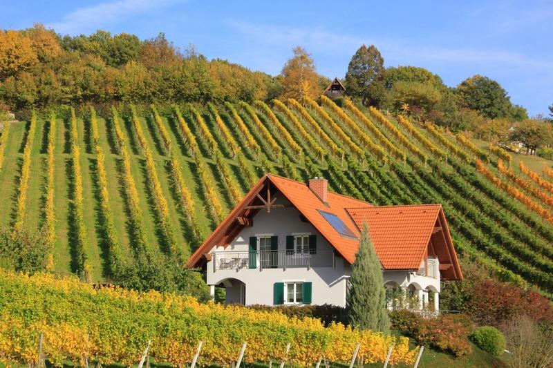Впервые во Франции: крошечный домик посреди виноградников в аренду