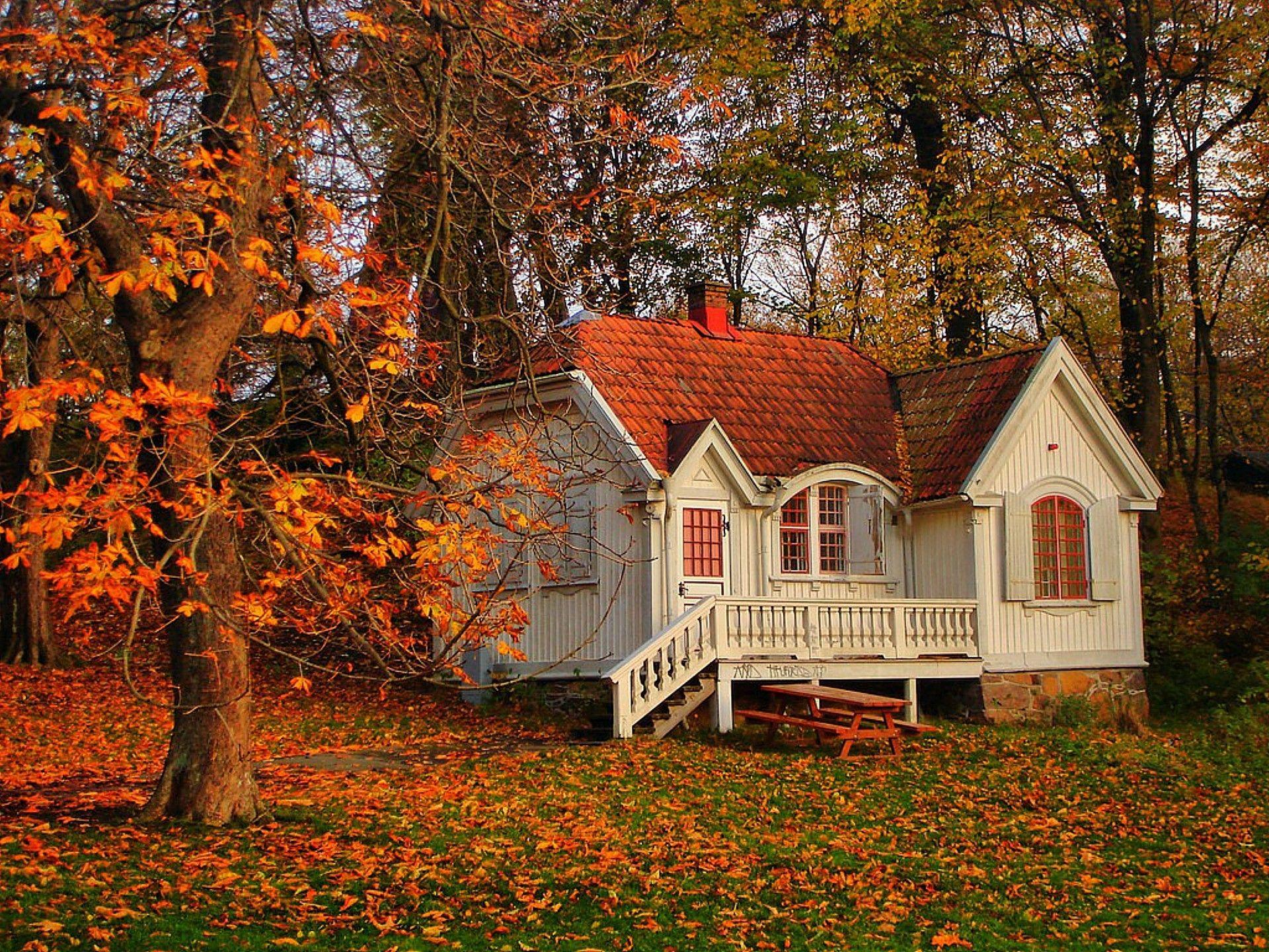 Осенний лук вашего дома